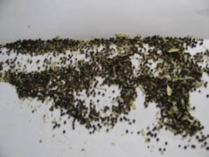 Saving Heirloom Seed