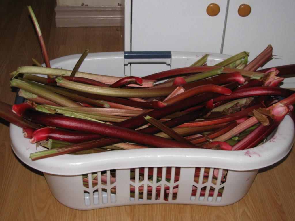 grow rhubarb, perennial food, farm