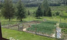 spring, garden, grow your own food