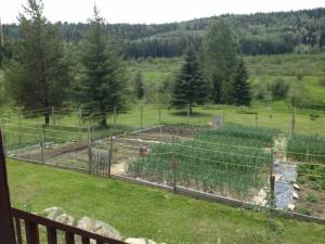 spring, garden, grow your own food