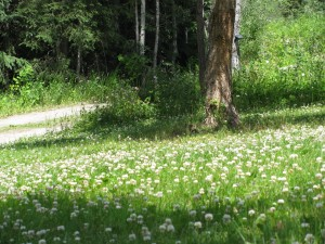 Plant Clover to Attract Bees