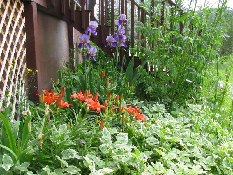 perennial flower bed in bloom