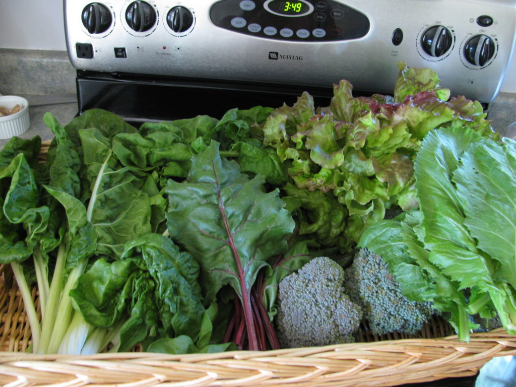 freshly picked greens including kale and lettuce in a basket