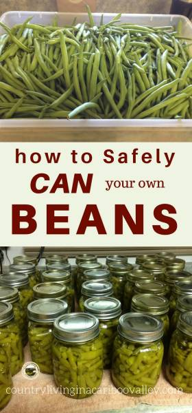 Pressure Canning Green Beans - Here's how to safely home can beans. Use a pressure canner instead of water bath. Tips for using a pressure canner. #preserving #canning #pantry #food #DIY