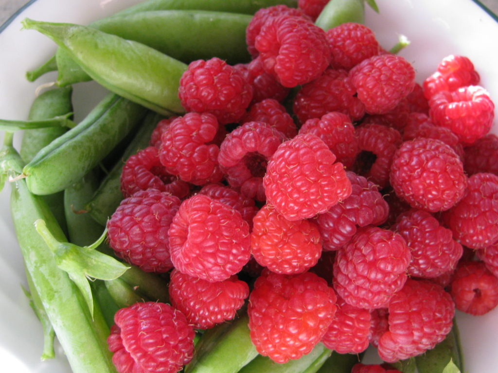 raspberry recipe, grow berries, gardening