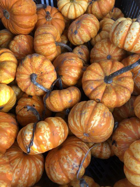 Basket of pumpkins.
