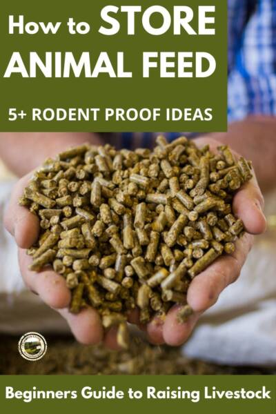 hands holding animal feed