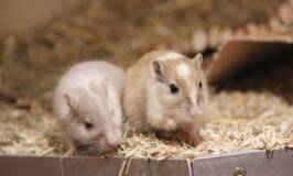 Learning how to store animal feed keeps mice away