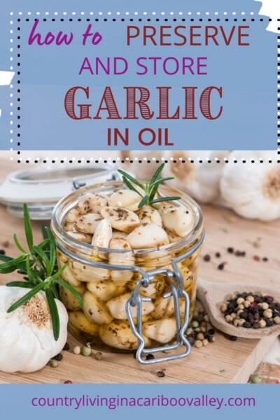 a jar of garlic in oil ready for the fridge