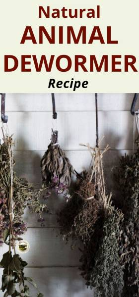 drying herbs hanging to be made into animal dewormer