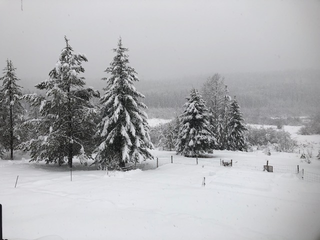 snow falling on trees in the country