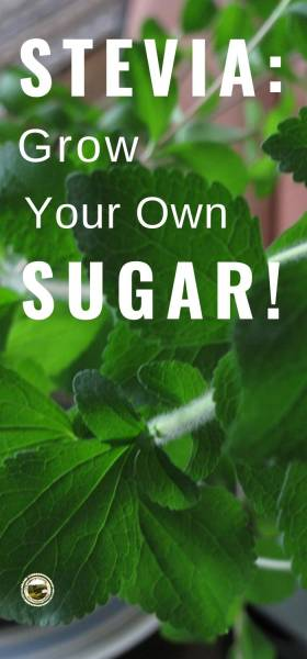 Grow Stevia and use as a natural sugar substitute.