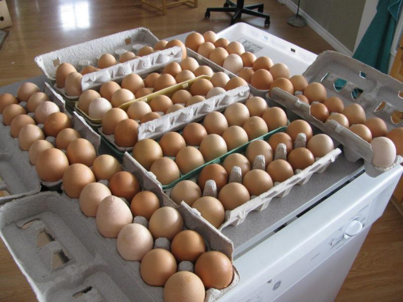 Several cartons full of fresh eggs.