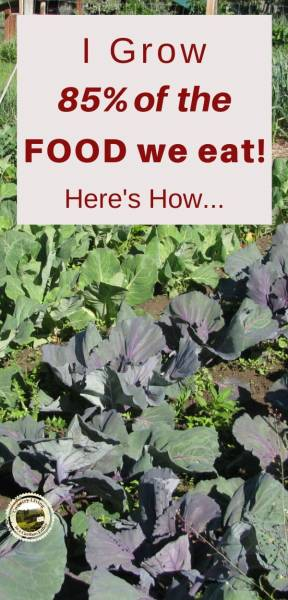 A garden with cauliflower, cabbage and garlic planted for winter storage Planning a vegetable garden is important if you want enough food for one year