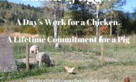 the difference between chickens and pigs, commitment