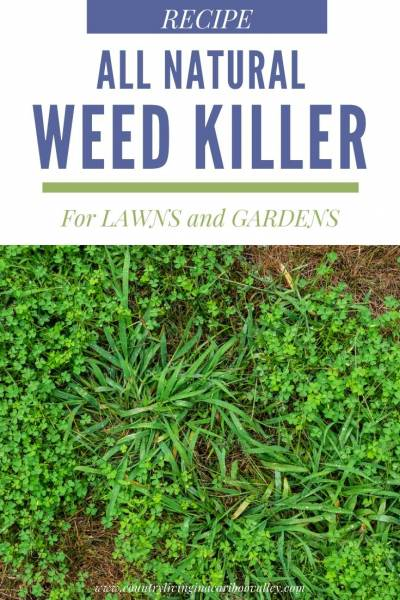 weeds to be sprayed with all natural weed killer
