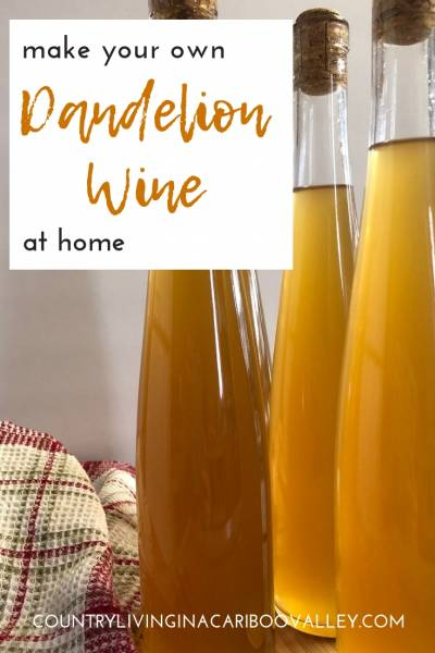 Make Dandelion wine. Unsprayed dandelion flowers can be turned into wine. Make your own wine at home. #dandelions #wine #recipe #vintner #dandelionwine