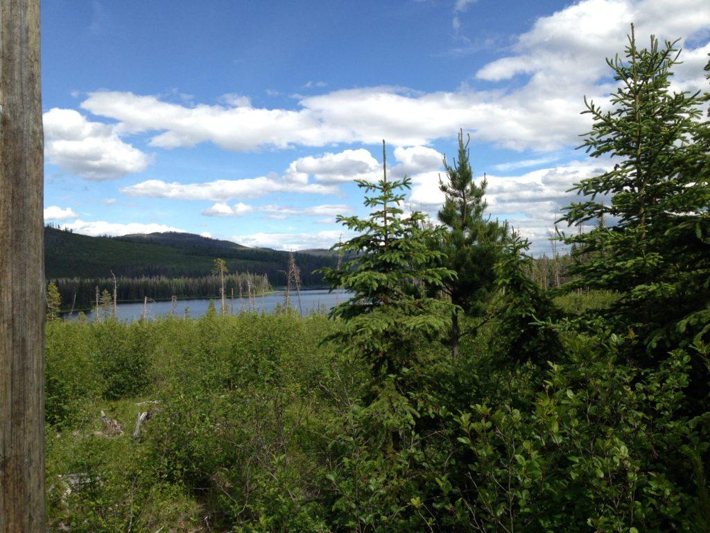 finding free firewood, fishing, bc, cariboo lakes