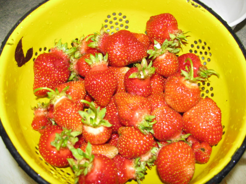 grow berries, strawberries, grow your own food, self sufficiency