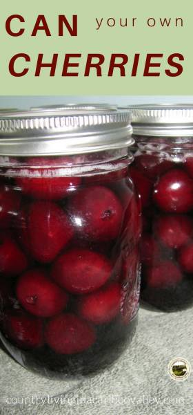 Safely home can cherries in jars by using this water bath canning recipe. Easy to do; stock up your pantry. #canning #waterbathcanning #recipe #selfsufficiency #cherries #canningfruit #fruit
