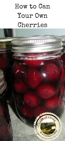 Here's a recipe and step by step instructions to can your own cherries in jars. #preserving #homecanning #pantry #food #recipe