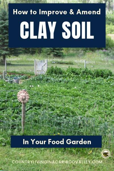 Fix clay soil so you can plant vegetables or flowers. Amend the soil using these 3 types of plants! #gardening #soil #DIY