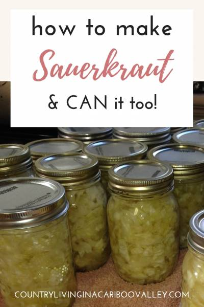 Jars of home canned Sauerkraut sit on the counter