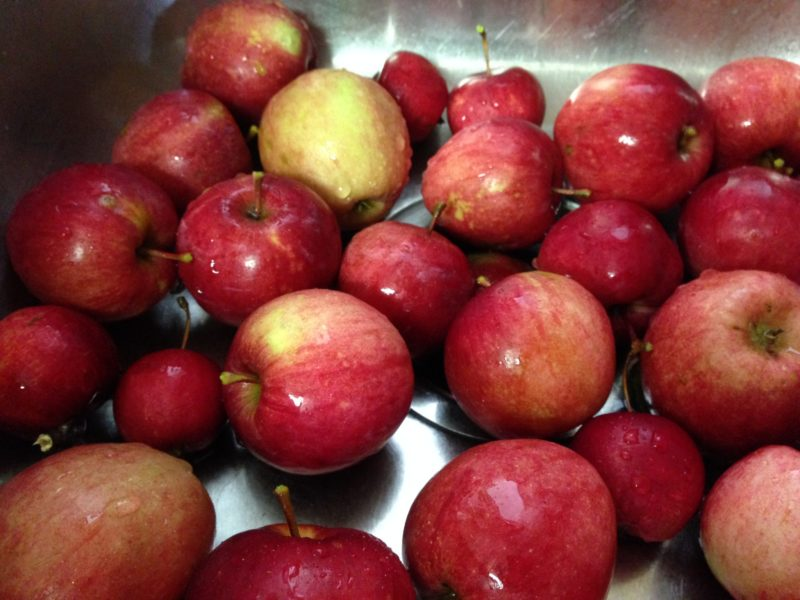 closeup shot of washed apples in a sink.