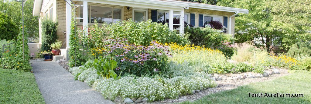 Gardening in the suburbs or town back yard can feed your family.