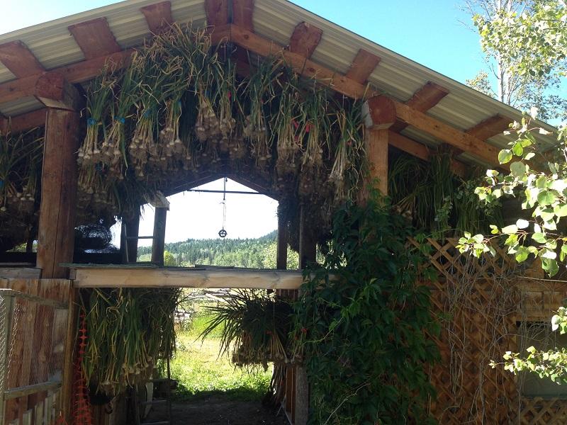 Bradley Creek Garlic Farms ships garlic across Canada. Zero chemicals all naturally grown!
