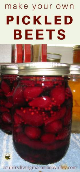 canned pickled beets sit on the counter