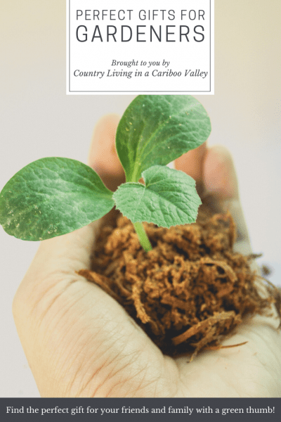 a growing seedling sitting in a person's hand