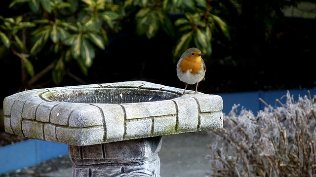 birds at a bird bath in winter