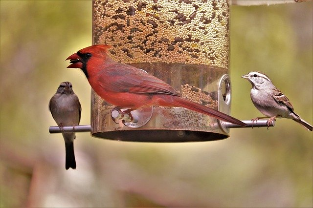 colorful birds gather at a bird feeder