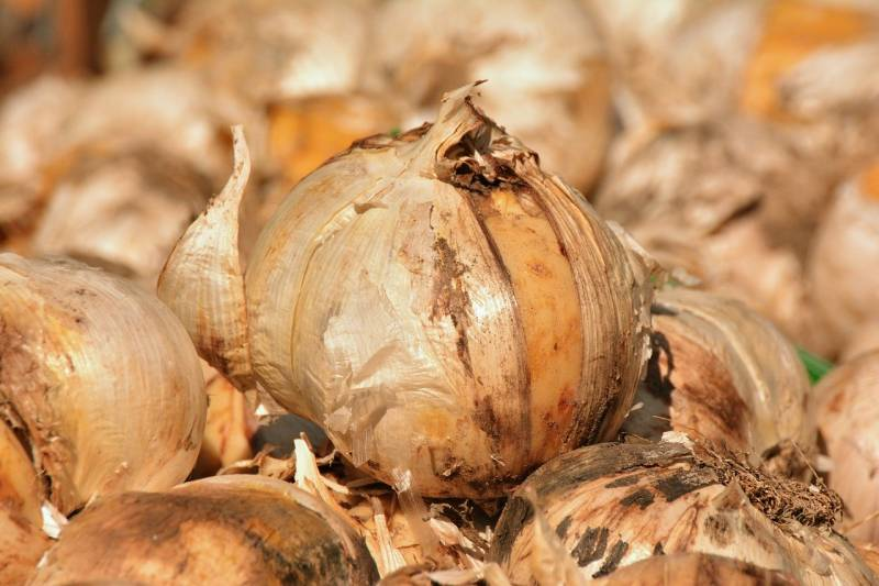 Plant fall bulbs for Spring color