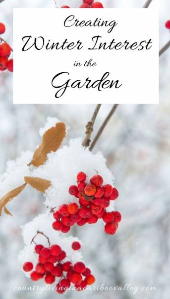 red berries create winter interest in the garden