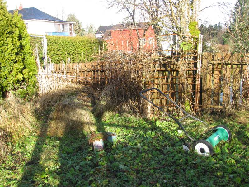 an overgrown garden that needs cleanup