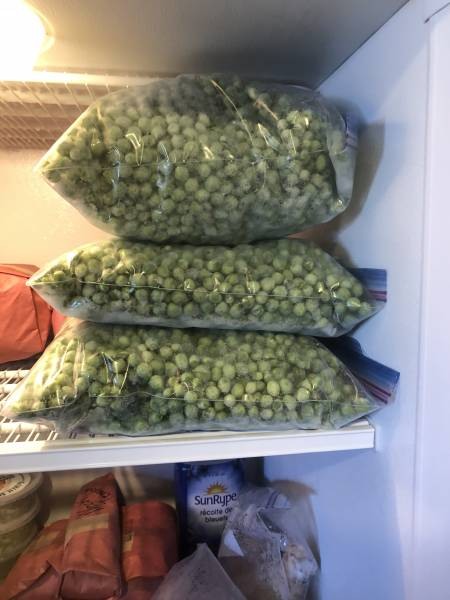 bags on frozen peas in the freezer