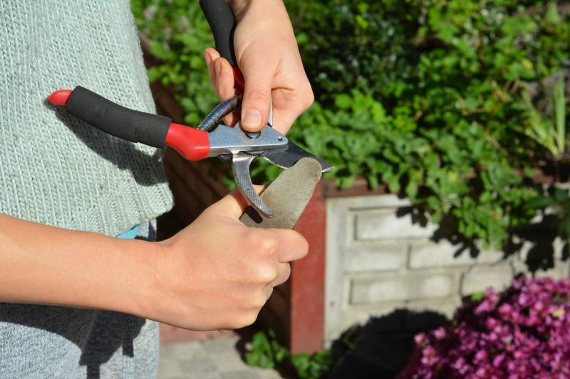 Care for pruning shears by sharpening them regularly.