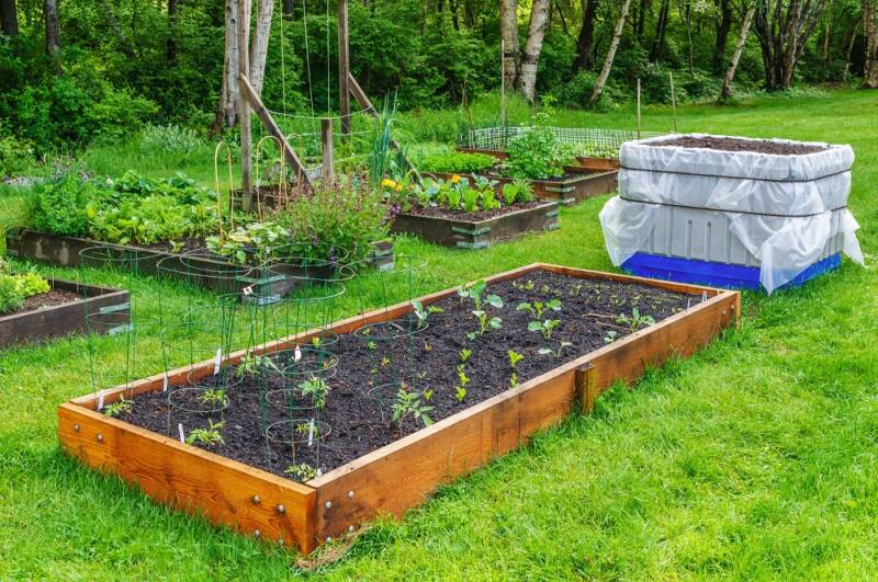 Raised Garden Beds growing vegetables