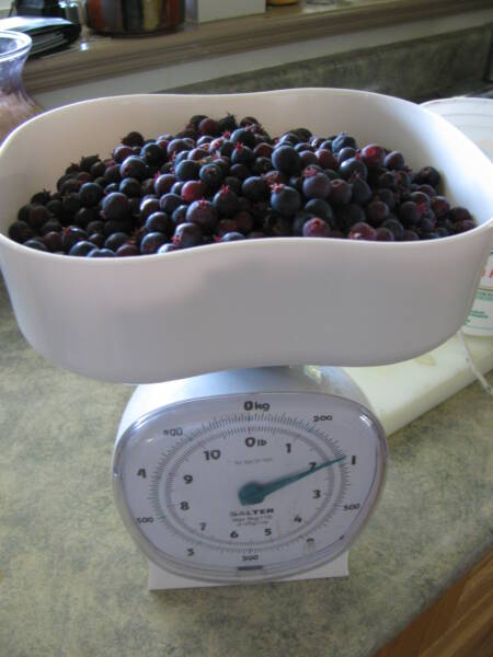 Washed Saskatoon berries ready for preserving.