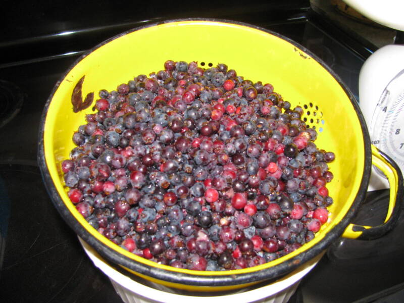 Washed fresh Saskatoon berries will be used for making wine.