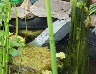 Нитчатые водоросли в пруду. Как очистить пруд от нитчатки