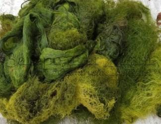 Нитчатка - зеленые водоросли. Как очистить пруд, как избавиться от нитчатки