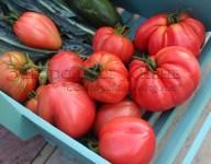 Болгарские помидоры. Крупные томаты 'Бычье сердце' с мягким вкусом