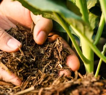 Полезные бактерии в почве повышают иммунитет и понижают тревогу