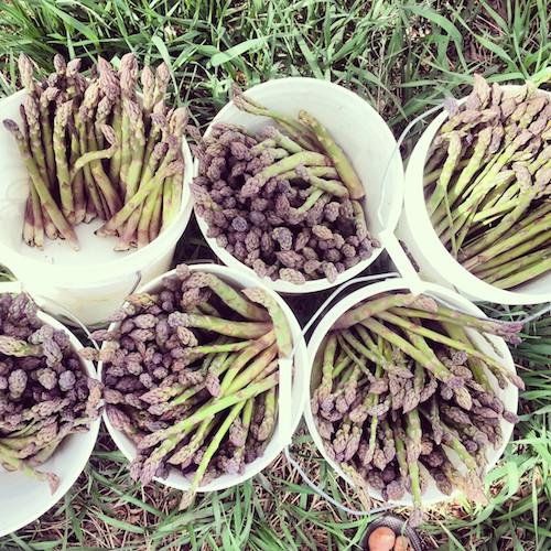 5.2.14 asparagus insta sm
