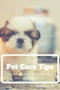 Learn how to take care of your furry friend when you're on a budget with these tips!