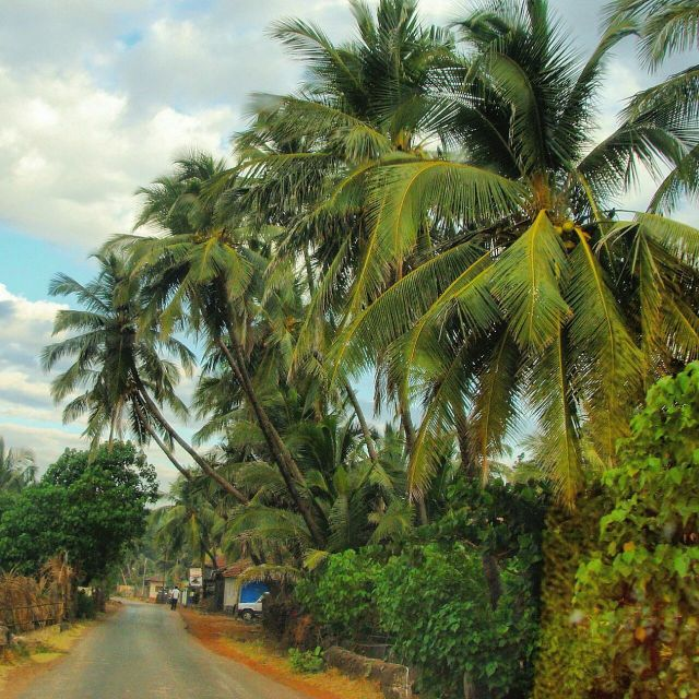 Coconut trees and a narrow road in Konkan