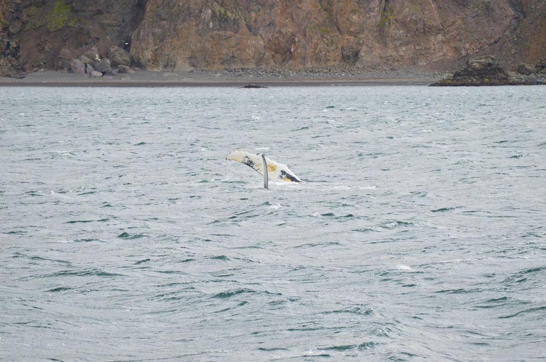 gay-couple-exploring-north-iceland-whale-watching-husavik-11